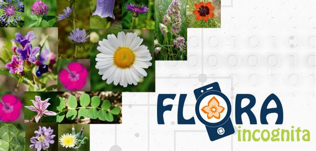 Flora Incognita - la nuova app per identificare le piante