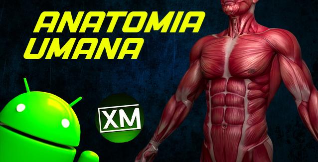 Le migliori app Android per studiare l'ANATOMIA UMANA